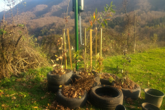 tyre nursery: oak, hazel, dogwood, chestnut, beech